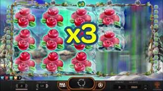 Winterberries multiplikator